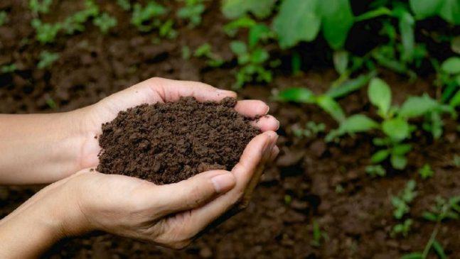 Agar Tumbuh dengan Subur, Kenali Jenis Tanah yang Baik